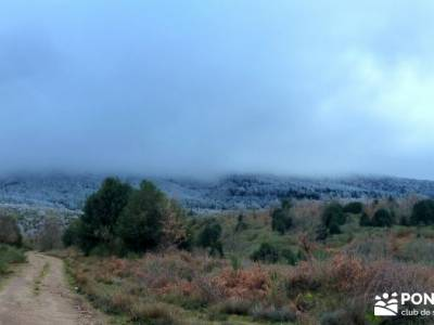 Acebos Montes Carpetanos; viajes senderismo españa
